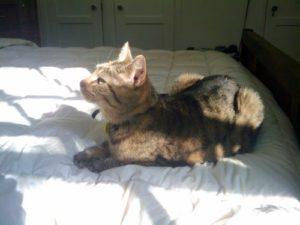 New Kitty lying down