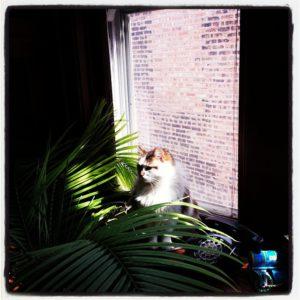 Fierce jungle cat.