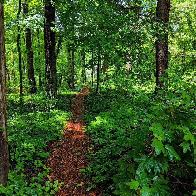 Woodthrush Woods