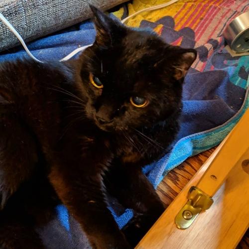 Marlowe, a black cat.
