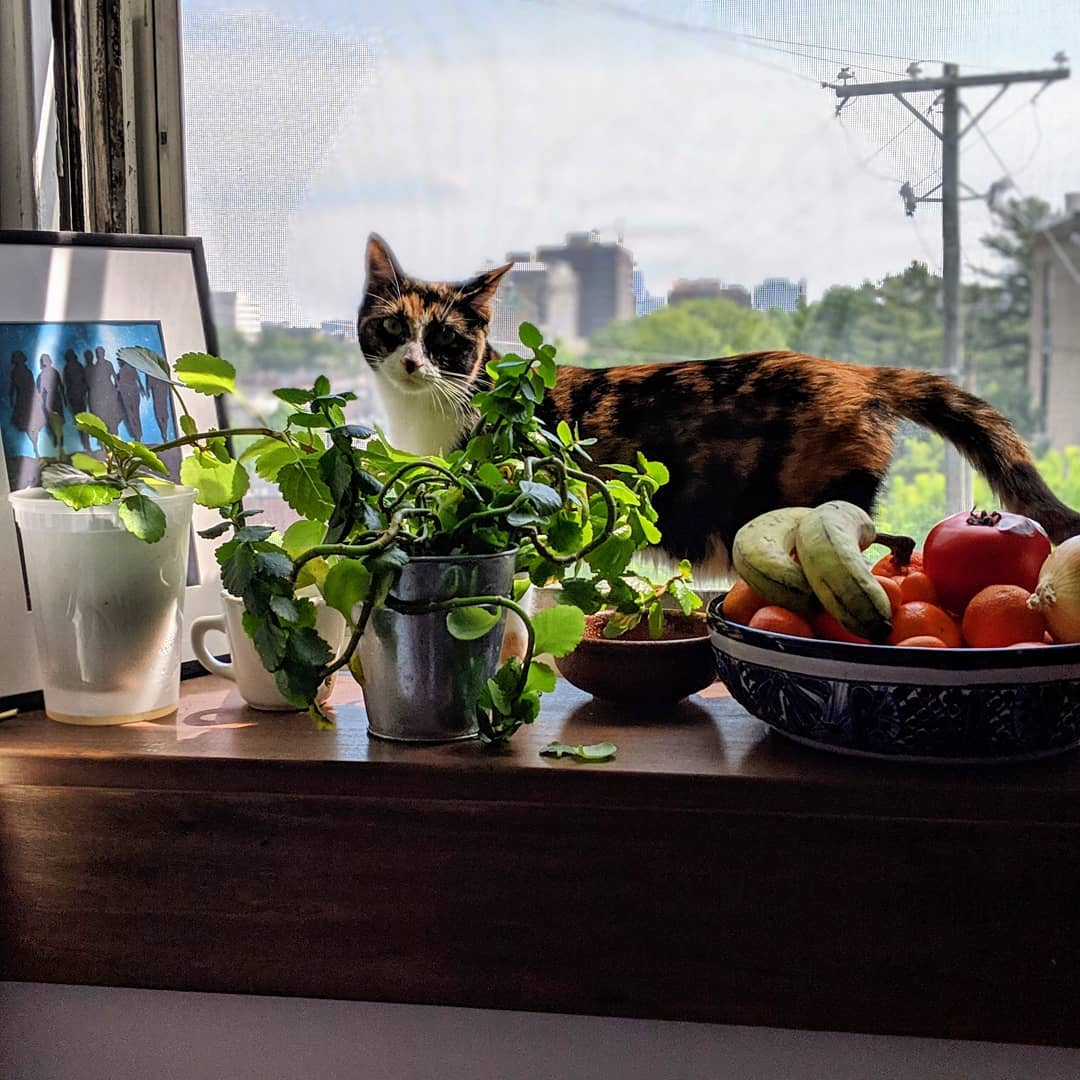 Elsie the cat in the plants on the windowsill